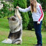 Hundeerziehung – Ratgeber